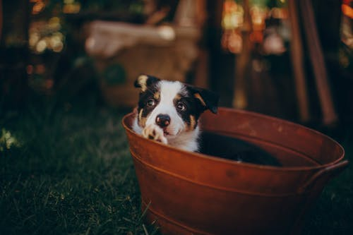 snoozle.nl hondenmand